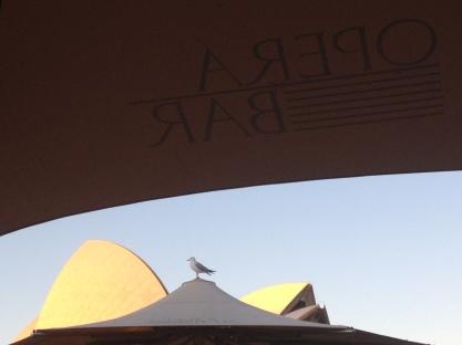 Bird on Sydney Opera House